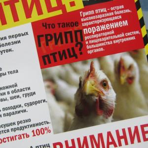 Профилактика очагов высокопатогенного гриппа птиц.